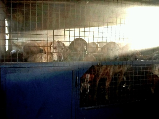 Hounds loaded and ready for home.