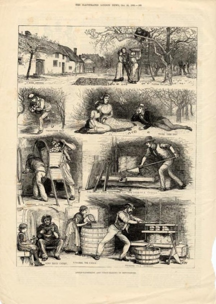 Commercial print of cider making in the 1800's