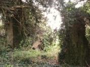 Exploring St. Erc's hermitage Slane Ireland