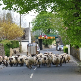 Traffic jam Loughmore Co. Tipperary