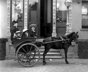 "Irish pony ""tub trap"", picture taken in Waterford Ireland 1880s"