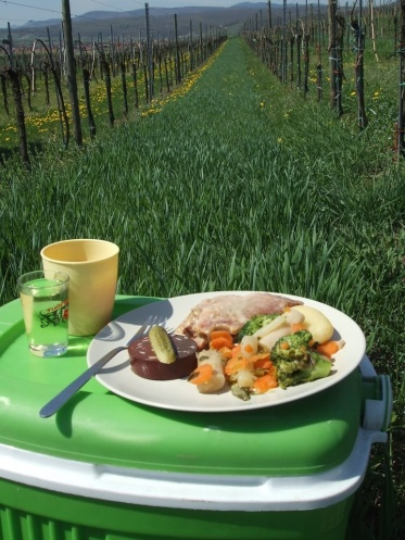 Lunch break in the vineyard, somewhere in the countryside of Alsace France
